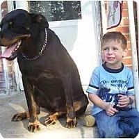 Adopt A Pet :: Alexa - Evansville, IN