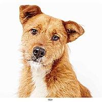 Adopt A Pet :: Troy - New York, NY