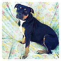 Adopt A Pet :: Rubi - Louisville, KY