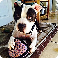 Adopt A Pet :: Boswell - San Diego, CA