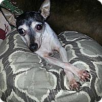 Adopt A Pet :: Harriet - Mt Gretna, PA