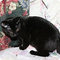 Adopt A Pet :: Serena - Santa Rosa, CA