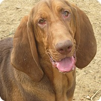 Adopt A Pet :: Rose Red - ADOPTION PENDING - Albany, NY