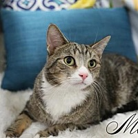 Adopt A Pet :: Max Male - Knoxville, TN
