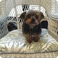 Adopt A Pet :: Mookie - Leesburg, FL