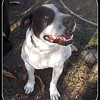 Adopt A Pet :: Victor - Girard, GA