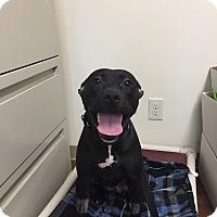 Adopt A Pet :: Mystic - Avon, OH