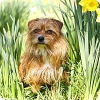 Adopt A Pet :: Archie - Auburn, CA