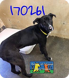 Labrador Retriever Mix Dog for adoption in Boston, Massachusetts - Colt
