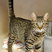 Adopt A Pet :: Marky Mark - Hollywood, MD