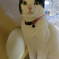 Adopt A Pet :: Karly - Las Vegas, NV