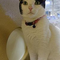 Adopt A Pet :: Karly - Las Vegas, NV