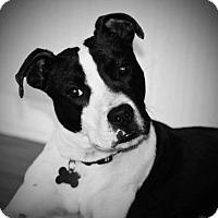 Adopt A Pet :: Cassian - Franklin, VA