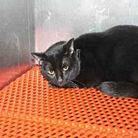 Adopt A Pet :: ABRA - Aurora, IL