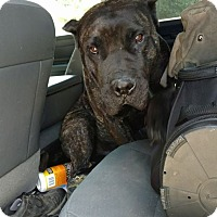 Adopt A Pet :: Memphis - holton, KS