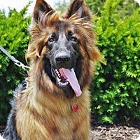 Adopt A Pet :: Magnus - Gretna, NE