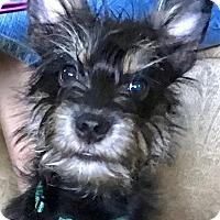 Adopt A Pet :: Mavis - Jasper, TN