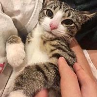 Adopt A Pet :: Maggie May - Westwood, NJ