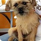 Adopt A Pet :: Belle
