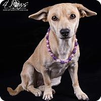Adopt A Pet :: Millie - Lodi, CA