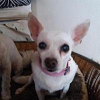Adopt A Pet :: Toby - Whitestone, NY