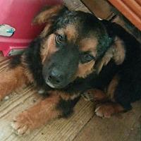 Adopt A Pet :: Simone - Pottstown, PA