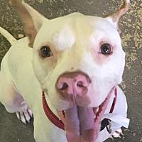 Adopt A Pet :: Kirk - Orlando, FL