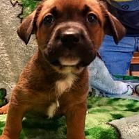 Adopt A Pet :: FLOYD - ST LOUIS, MO