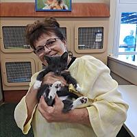 Adopt A Pet :: Jack - Palm Springs, CA
