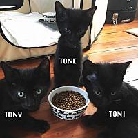 Adopt A Pet :: Tony, Toni & Tone - Philadelphia, PA