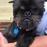 Adopt A Pet :: Millie - Omaha, NE