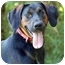 Photo 1 - Black and Tan Coonhound Mix Dog for adoption in Mora, Minnesota - Joe