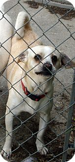 Chihuahua/Terrier (Unknown Type, Small) Mix Dog for adoption in Daleville, Alabama - Buster