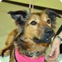 Adopt A Pet :: Greta - Kingwood, TX