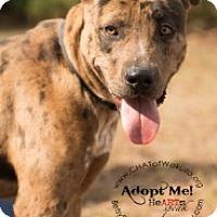 Adopt A Pet :: Demo - Crawfordville, FL