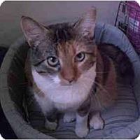 Adopt A Pet :: Doris Day - Lombard, IL