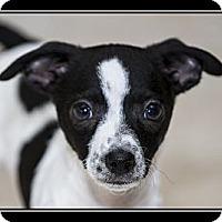 Adopt A Pet :: Zach - Fort Braff, CA