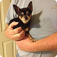 Adopt A Pet :: Harley - Poulsob, WA