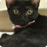 Adopt A Pet :: Merida - Sacramento, CA
