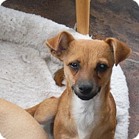 Adopt A Pet :: Squeaky - Arenas Valley, NM
