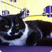 Adopt A Pet :: Harlequin - Sacramento, CA