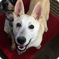 Adopt A Pet :: Meeko - Woodward, OK