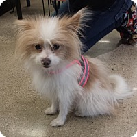 Adopt A Pet :: Dolby - Encino, CA
