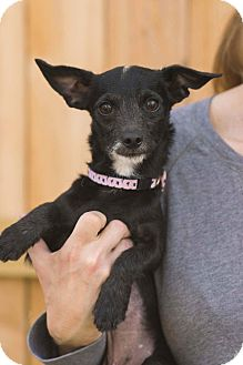 Terrier (Unknown Type, Small) Mix Dog for adoption in Fort Atkinson, Wisconsin - Baby