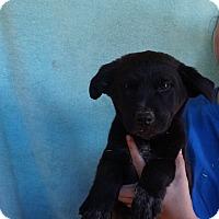 Adopt A Pet :: Chip - Oviedo, FL