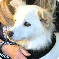 Adopt A Pet :: Madison-ADOPTION PENDING - Boulder, CO