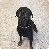 Adopt A Pet :: Elmo - Sayville, NY