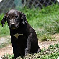 Adopt A Pet :: Berdina - South Dennis, MA