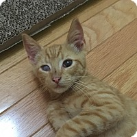 Adopt A Pet :: Dylan - Mount Pleasant, SC