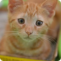 Adopt A Pet :: Bowie - Madison, NJ